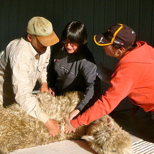 New Alpaca Owner Support at Pinjarra